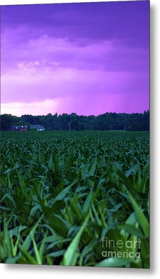 Cornfield Landscapes Purple Rain Metal Print by Cathy  Beharriell
