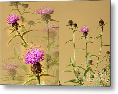 Cornflower Collage Metal Print