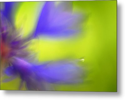 Cornflower Metal Print by Silke Magino
