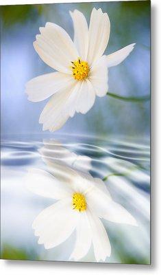 Cosmea Flower - Reflection In Water Metal Print by Silke Magino