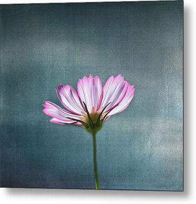 Cosmos - Summer Love Metal Print by Kim Hojnacki