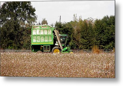 Cotton Picker Metal Print