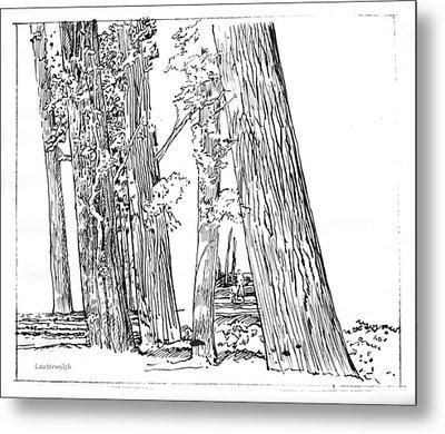 Cotton Woods Creve Coeur Path Metal Print by John Lautermilch