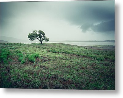 Metal Print featuring the photograph Cottonwood In October Storm by Alexander Kunz