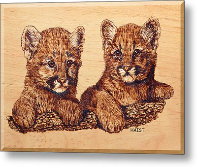 Cougar Cubs Metal Print by Ron Haist