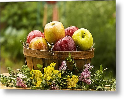 Country Basket Of Apples Metal Print by Trudy Wilkerson
