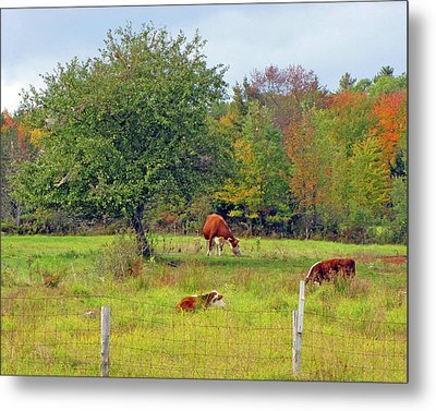 Country Dream Metal Print