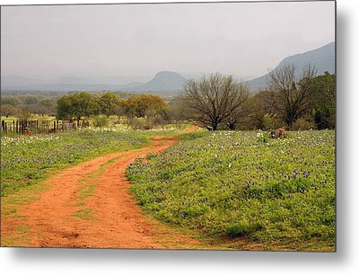 Country Road With Wild Flowers Metal Print