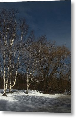 Country Roadside Birch Metal Print