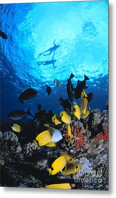 Couple Snorkels At Surfac Metal Print by Ed Robinson - Printscapes