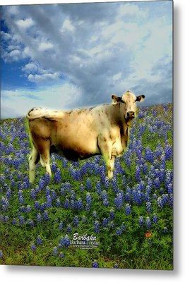 Metal Print featuring the photograph Cow And Bluebonnets by Barbara Tristan