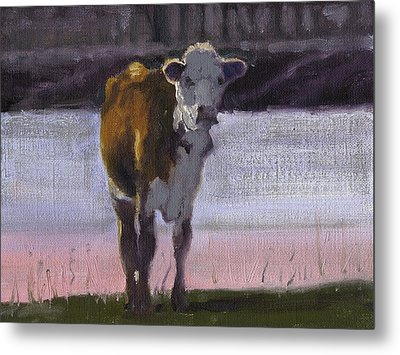 Cow At The Pond Metal Print