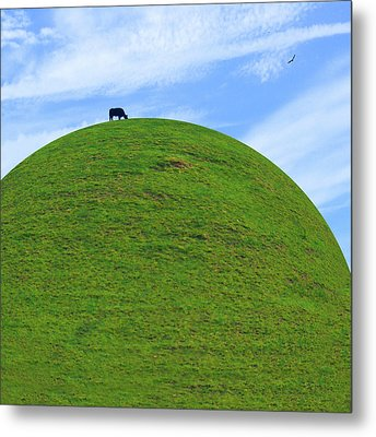Cow Eating On Round Top Hill Metal Print by Mike McGlothlen