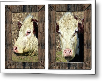 Cow Framed Metal Print by Tina M Wenger