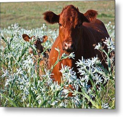 Cow Hide Metal Print