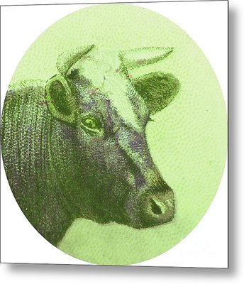 Cow II Metal Print