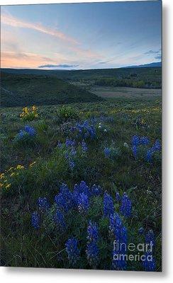 Cowiche Wildflower Sunset Metal Print