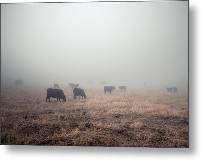 Metal Print featuring the photograph Cows In Fog - Color by Alexander Kunz