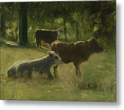 Cows In The Sun Metal Print by John Reynolds