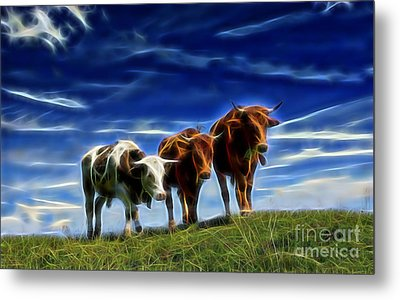 Cows Metal Print by Marvin Blaine