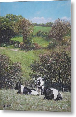 Cows Sitting By Hill Relaxing Metal Print by Martin Davey