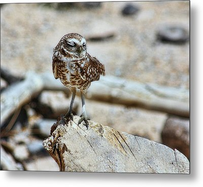 Coy Metal Print by Tammy Espino