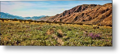 Coyote Canyon Meadow View Metal Print