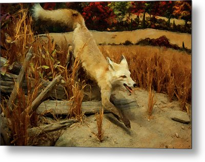 Metal Print featuring the digital art Coyote  by Chris Flees