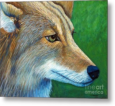 Coyote Logic Metal Print by Brian  Commerford
