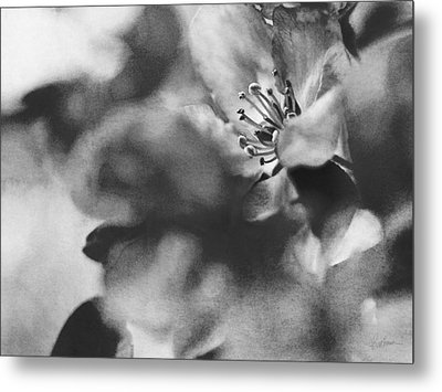 Crab Apple Blossoms Metal Print