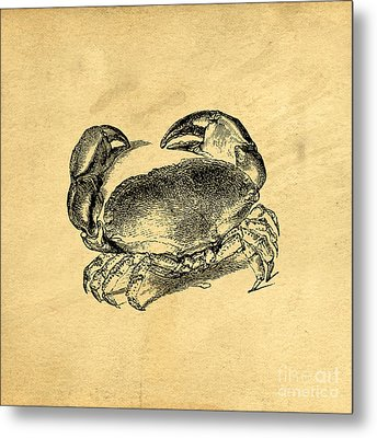 Metal Print featuring the drawing Crab Vintage by Edward Fielding
