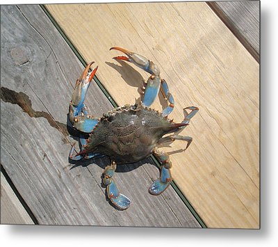 Metal Print featuring the photograph Crabby Blue by Beth Akerman