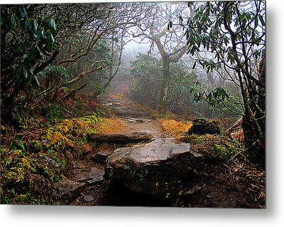 Metal Print featuring the photograph Craggy Gardens by Jessica Brawley