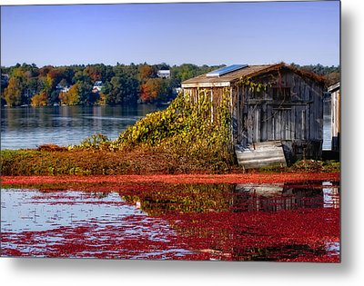 Cranberry Bog Farm II Metal Print by Gina Cormier