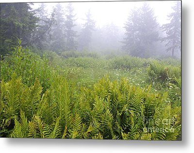 Cranberry Glades Early Morning Metal Print by Thomas R Fletcher