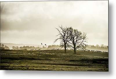 Metal Print featuring the photograph Crane Hill by Torbjorn Swenelius