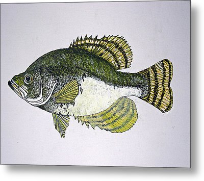 Crappie Fish Of Usa  Metal Print by Don Seago