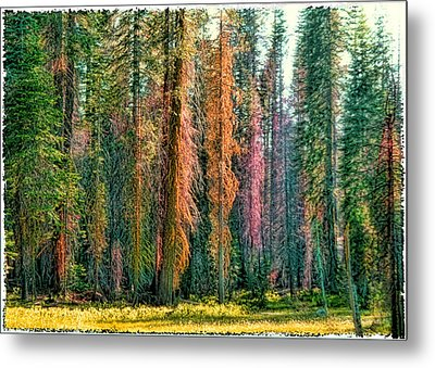 Metal Print featuring the photograph Crayon Forest by Michael Cleere