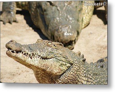Metal Print featuring the photograph Crazy Saltwater Crocodile by Gary Crockett