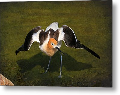 Creating A Diversion Metal Print by Donna Kennedy