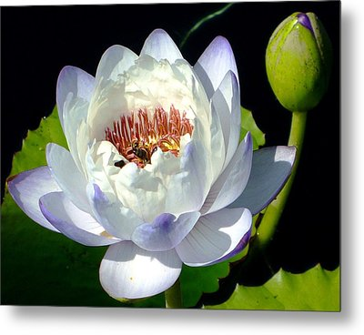 Metal Print featuring the photograph Creation by Brenda Pressnall