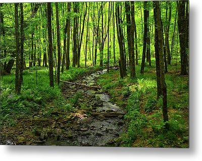 Creek Leading To The Delaware River Metal Print by Raymond Salani III