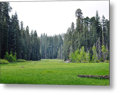 Metal Print featuring the photograph Crescent Meadow by Kyle Hanson