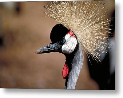 The I Can't Believe It Bird Metal Print by Carl Purcell