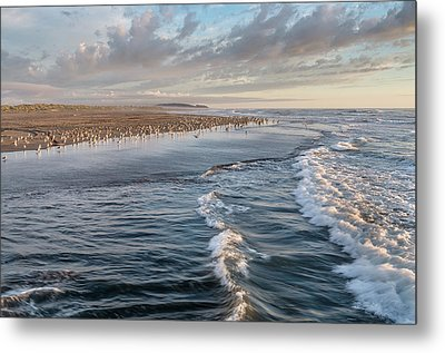 Metal Print featuring the photograph Crests And Birds by Greg Nyquist