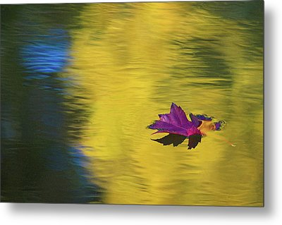 Metal Print featuring the photograph Crimson And Gold by Steve Stuller