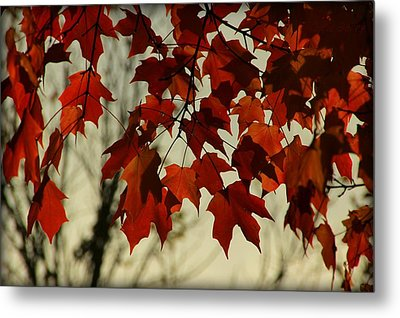 Metal Print featuring the photograph Crimson Red Autumn Leaves by Chris Berry