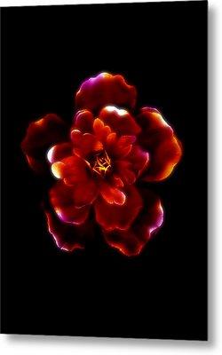 Crimson Bloom Metal Print by Dolly Mohr