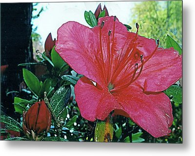 Metal Print featuring the photograph Crimson by Larry Bishop