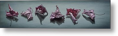 Crinkled Leaves  Metal Print by Maggie Terlecki